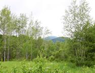 terrains-a-vendre-mont-orford-lot-no-1463-32