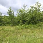 Land for sale in Eastern Townships (lot 2363)