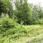Land for sale in Eastern Townships (lot 2379)
