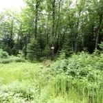 Land for sale in Eastern Townships (Lot 2382)