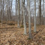Land for sale in Eastern Townships (lot 2623)