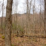 Land for sale in Eastern Townships (land 34.5 acres)